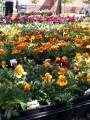 wasatch-gardens-04